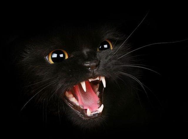Сказ кота виявлено на Прикарпатті