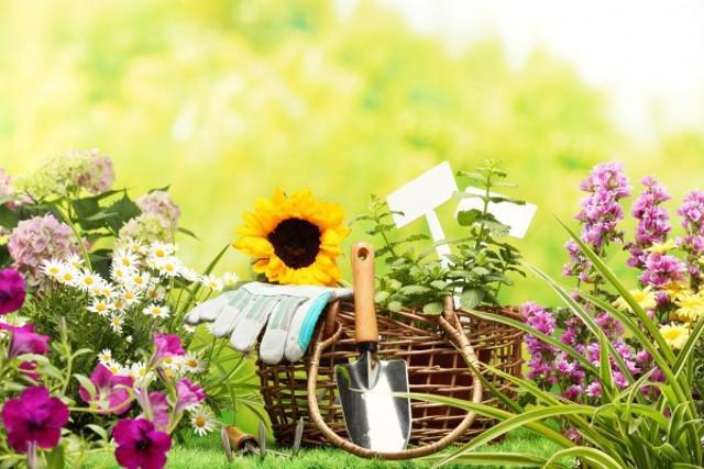 Догляд за садом  поради від рівненського експерта  4c588f90ca6d4
