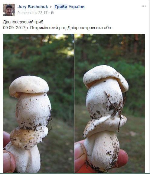 Українці знаходять гриби у два поверхи (ФОТО)