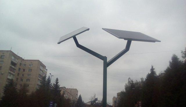 Сонячне дерево<br /> <br /> Фото Олександра Шевчука