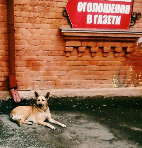 Фото Олександра Шевчука