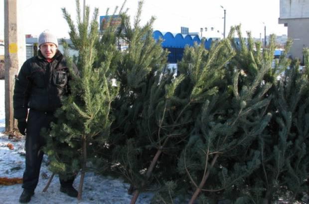 как продавпть елки на рынке