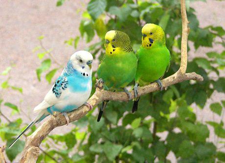 Радощі життя активне спілкування