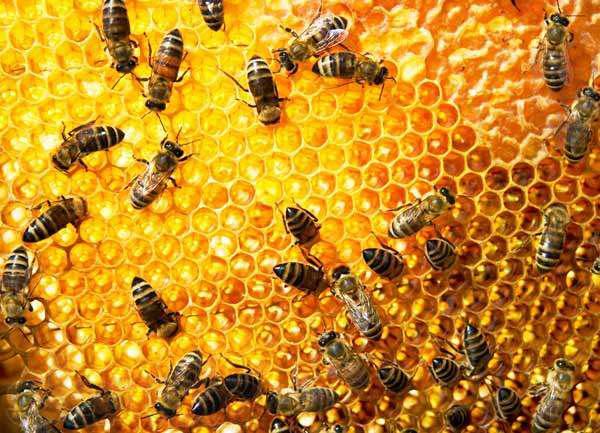 Картинки по запросу бджільництво