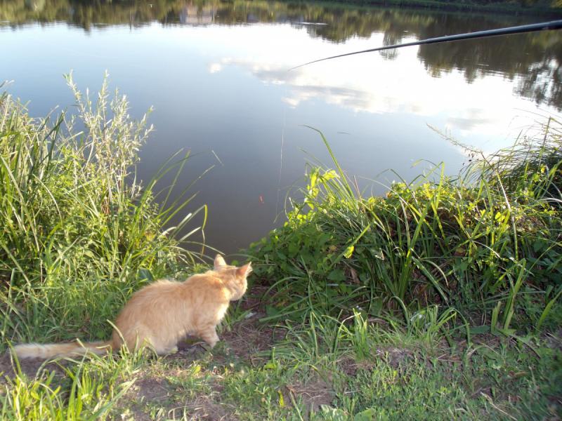 интервал кот-рыбы мужчина ноябрь 2015 элемента, образующего