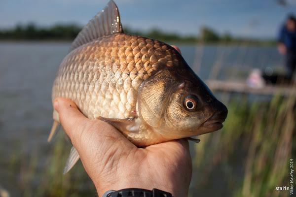 На Закарпатті заборонено вилов риби