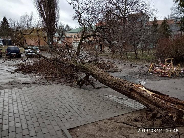 Повалене дерево на вул. Степана Бандери