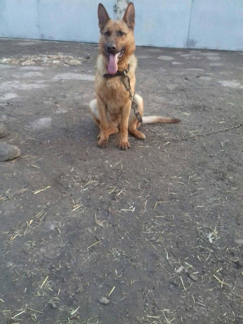 Грета - собака кореспондента ОГО Марії Ясинчук