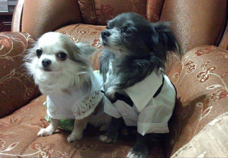 Єва і Гєша - собаки рекламного менеджера ОГО Ірина Лавренюк