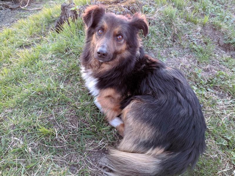Беніто - собака кореспондента ОГО Олесі Полюхович