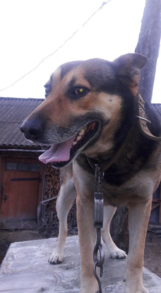 Барбосій - собака головного редактора ВД ОГО Віталія Голубєва
