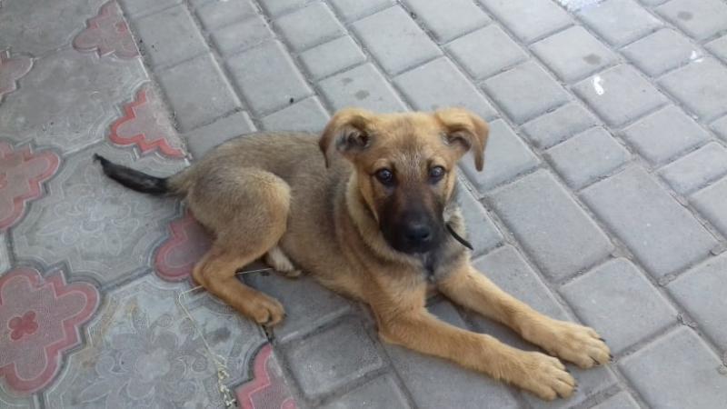 Коржик - собака рекламного менеджера ОГО Марини Кушнірук