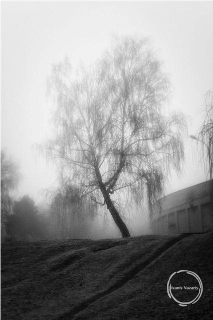 Автор фото - Назарій Іванів